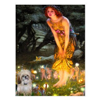 Midsummers Eve - Shih Tzu (P) Post Cards