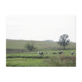 Midwest Farm Dairy Cows  Photography Wall Art