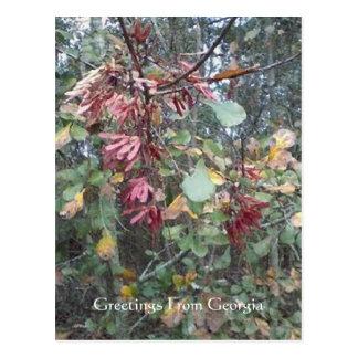 Midwinter Oak & Maple Georgia Botanical Postcard