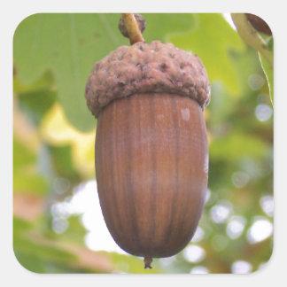 Mighty Acorn in an Oak Tree Stickers