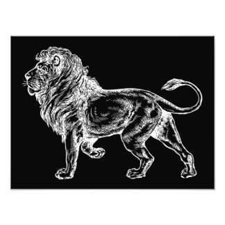 Mighty Lion Sketch Photographic Print
