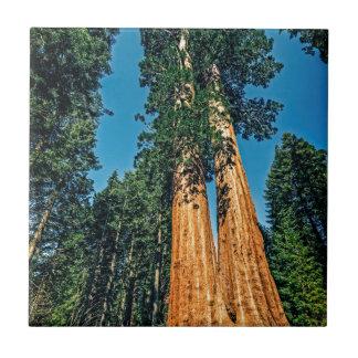 Mighty Redwood Ceramic Tile