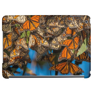 Migrating monarch butterflies cling to leaves