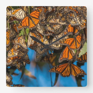 Migrating monarch butterflies cling to leaves square wall clock