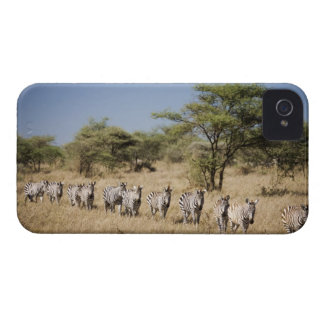 Migrating zebra, Tanzania iPhone 4 Cases