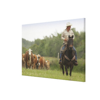 Mike Campbell returning with cows, Seadrift, Canvas Print