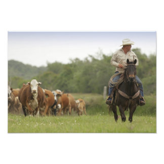 Mike Campbell returning with cows, Seadrift, Photo Print
