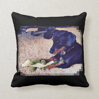 Miles - Hobie - Dachshund X Cushion