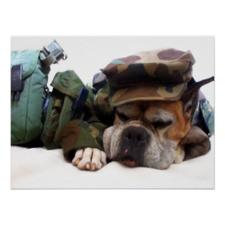 Military boxer dog poster