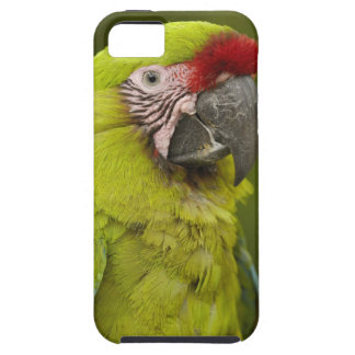 Military macaw (Ara militaris) CAPTIVE. Amazon 2 Case For The iPhone 5