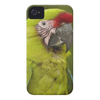 Military macaw (Ara militaris) CAPTIVE. Amazon 2 iPhone 4 Cover