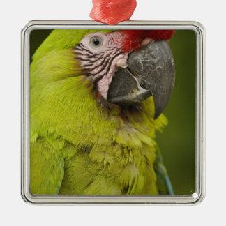 Military macaw (Ara militaris) CAPTIVE. Amazon 2 Silver-Colored Square Decoration