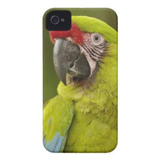 Military macaw (Ara militaris) CAPTIVE. Amazon iPhone 4 Covers