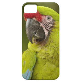 Military macaw (Ara militaris) CAPTIVE. Amazon iPhone 5 Cover
