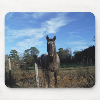 Milk Chocolate Brown Horse in Blue Mouse Pads