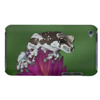 Milk Frog, Trachycephalus resinifictrix iPod Touch Case-Mate Case