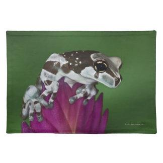 Milk Frog, Trachycephalus resinifictrix Placemat