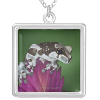 Milk Frog, Trachycephalus resinifictrix Silver Plated Necklace