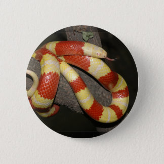 Milk snake 6 cm round badge