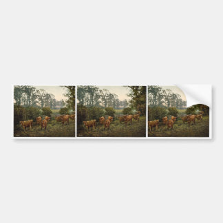 Milking time, England magnificent Photochrom Bumper Stickers