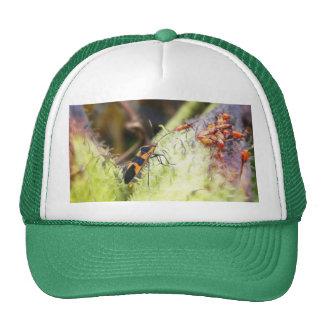 Milkweed Bug And - Oncopeltus Fasciatus Cap