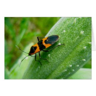 Milkweed Bug Note Card