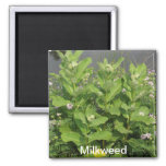 Milkweed Magnet