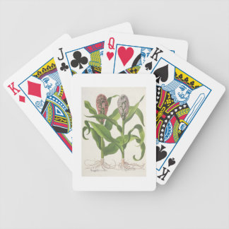 Millet: 1.Sorgum fructu rubro; 2.Sorgo fructu albo Bicycle Playing Cards