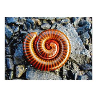 Millipede Trigoniulus Corallinus Curled Arthropod 13 Cm X 18 Cm Invitation Card