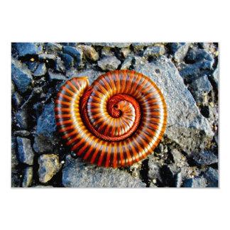 "Millipede Trigoniulus Corallinus Curled Arthropod 3.5"" X 5"" Invitation Card"