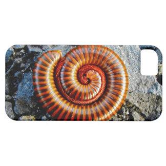 Millipede Trigoniulus Corallinus Curled Arthropod iPhone 5 Cover