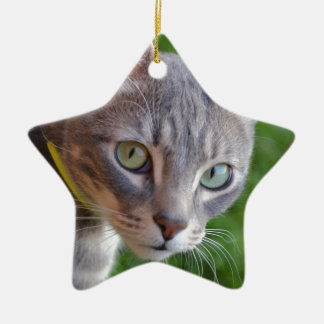 Milo the Silver Tabby Ceramic Star Decoration