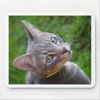 Milo the Silver Tabby Mouse Pad