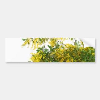 Mimosa Bumper Sticker