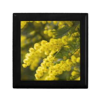 mimosa in bloom small square gift box