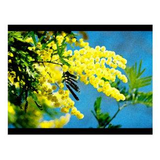 Mimosa of France Postcard
