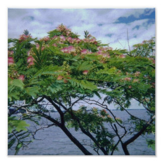 Mimosa Tree in Bloom Poster