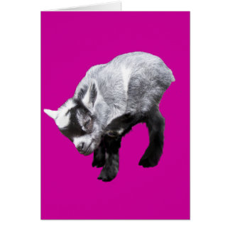Minature Goat Scratching Greeting Card
