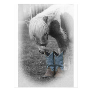 minature horse and boots postcard