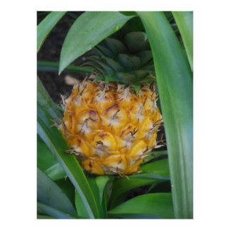 Minature Pineapple Poster