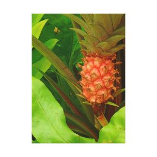Minature Pink Pineapple Canvas Print
