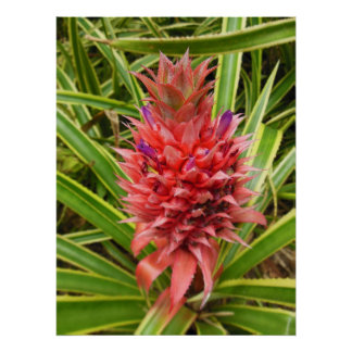 Minature Pink Pineapple Poster
