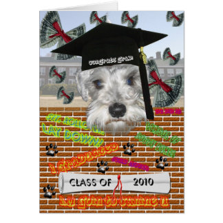 Minature Schnauzer Graduation Card