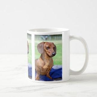 Minature Smooth Dachshund Coffee Mugs