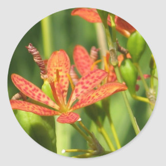 Minature Tiger Lily Stickers