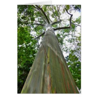 Mindanao Gum Tree Card
