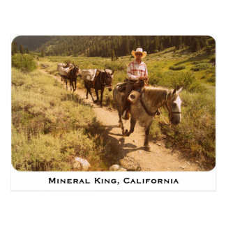 Mineral King pack Mules Post Cards