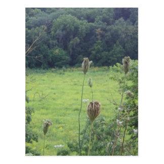 Mines of Spain Meadow Postcard