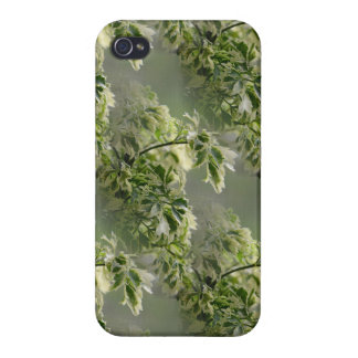 Ming Aralia Foliage in the Fog Covers For iPhone 4