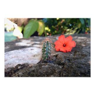 Mini Cactus print Photo Art